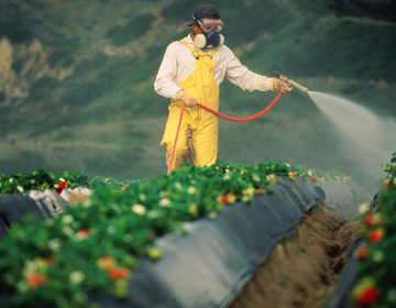 Pesticides in food: Creating a havoc on sperm quality